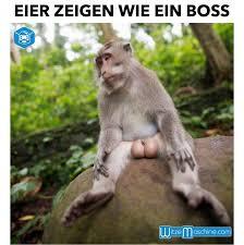 Bildergebnis für schimpanse mit grossen hoden